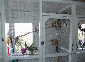 View of Smaller Holding Cage